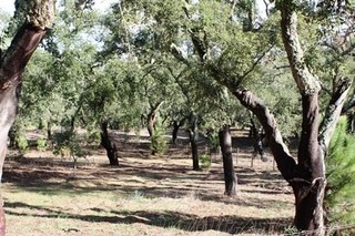 Living Portugal Property Announces Purchase of 10-Hectare Estate Near Comporta