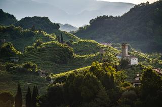 The Consortium for the Protection of Conegliano Valdobbiadene Prosecco DOCG announces results of the 2021 harvest